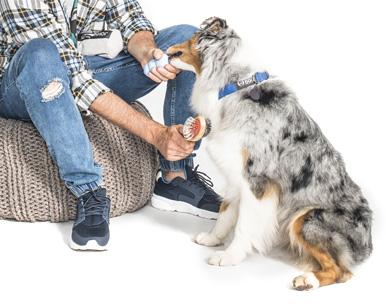 pielęgnacja psa 1